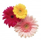 Dampfbad Blüten & Blumen